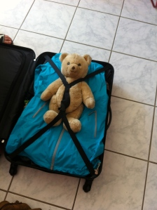Teddy is safely packed