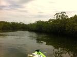 Everglades-Tour