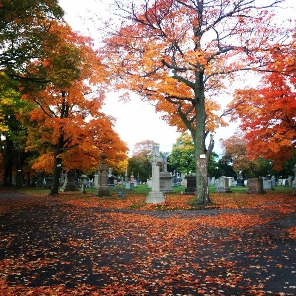 fall_arlington